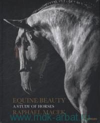 Equine Beauty. A Study of Horses