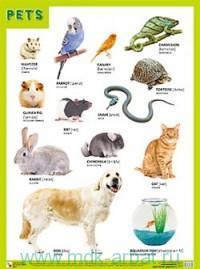 Pets : плакат