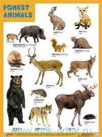 Forest Animals : плакат