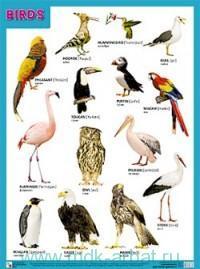Birds : плакат