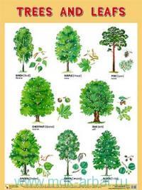 Trees and leafs : плакат