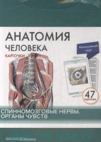 Анатомия человека. Спинномозговые нервы ; Органы чувств : карточки