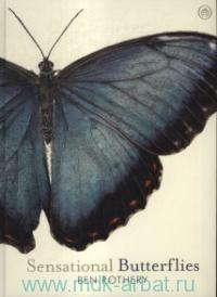 Sensational Buterflies