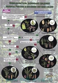 Наглядный определитель деревьев средней полосы России в летний сезон