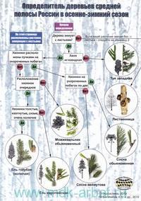 Наглядный определитель деревьев средней полосы России в зимний сезон