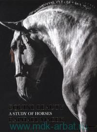 Equine Beauty : A Study of Horses