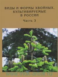 Виды и формы хвойных, культивируемых в России. Ч.3. Abies Mill,. Chamaecyparis Spach