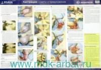 Кастрация : советы и предложения : ветеринарный плакат