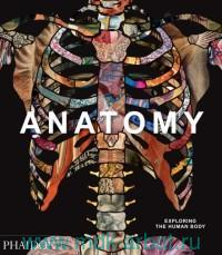 Anatomy : Exploring the Human Body