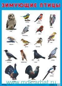 Зимующие птицы : плакат